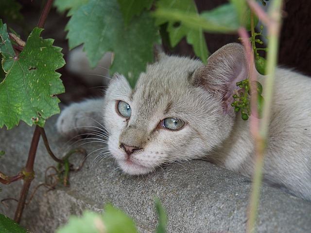 Málo známé kočkovité šelmy
